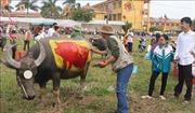 Vẽ trang trí trâu tại Lễ hội Tịch điền Đọi Sơn, Hà Nam