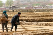 Liên hợp quốc viện trợ khẩn cấp gần 8 triệu USD cho Triều Tiên