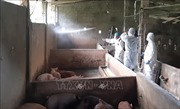 Bình Dương ngăn chặn dịch tả lợn châu Phi lây lan