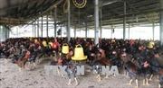 Lấy ý kiến cho nghị định xử phạt vi phạm hành chính lĩnh vực chăn nuôi