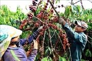 Xuất khẩu nông sản năm 2018 đạt mức kỷ lục mới, hơn 40 tỷ USD