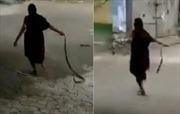 Cụ bà Ấn Độ tay không kéo lê rắn hổ mang quẳng đi