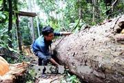 Khởi tố vụ phá rừng phòng hộ quy mô lớn ở Bình Định