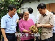 Hưng Yên khai thác thế mạnh vùng nông nghiệp ven Thủ đô