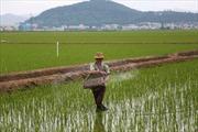HĐBA LHQ nhất trí mở đường viện trợ nhân đạo cho Triều Tiên