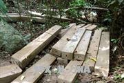 Chờ kết quả điều tra vụ phá rừng trái phép tại Ngân Sơn, Bắc Kạn