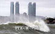 Bão Soulik gây thiệt hại tại Hàn Quốc