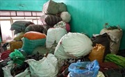 Khởi tố vụ án buôn lậu dược liệu xuyên quốc gia quy mô lớn