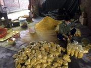 Trộn lưu huỳnh vào củ riềng xay nhỏ để bán