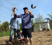 Vượt đập bằng vỏ lãi khám phá rừng tràm U Minh Thượng
