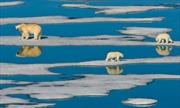 Nắng nóng đang tàn phá môi trường đại dương