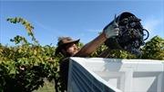 Australia nới lỏng thị thực cho lao động nước ngoài