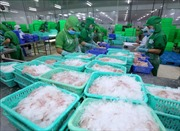Giữ vững vị thế sản phẩm chủ lực cho cá tra Việt Nam