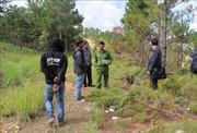 Đưa 2 'lâm tặc' tới xác minh hiện trường vụ chặt hạ rừng thôngtại Đà Lạt