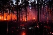 Biến đổi khí hậu gây ra các đợt nắng nóng bất thường và cháy rừng gần đây