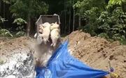 Tự ý thu tiền của người dân trong quá trình tiêu hủy lợn bị bệnh