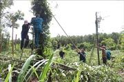 Mưa lớn kèm theo lốc xoáy ở Bình Phước, hàng ngàn trụ tiêu bị gãy đổ