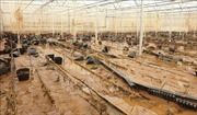 Lũ quét bất ngờ gây thiệt hại nặng nề cho người dân Lạc Dương, Lâm Đồng