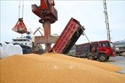 Trung Quốc thể hiện thiện chí trước thềm đàm phán thương mại với Mỹ