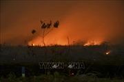 Indonesia: Bùng phát cháy rừng tại các đồn điền thuộc sở hữu của công ty Malaysia