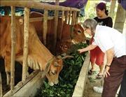 Giúp đỡ nạn nhân chất độc da cam gắn với giảm nghèo bền vững