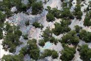 Hải quân Brazil nỗ lực cứu rạn san hô khỏi dầu loang