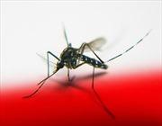 Cấy gien 'tử thần' để tiêu diệt loài muỗi