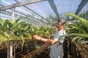 Làm giàu từ trồng hoa lan