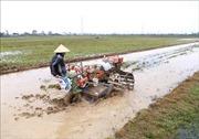 Hà Nội sẽ hoàn thành việc lấy nước gieo cấy vụ Đông Xuân trong đợt 3