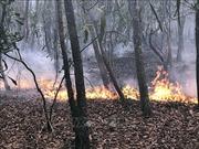 Cơ bản khống chế vụ cháy rừng tràm phòng hộ ở Hòn Đất, Kiên Giang