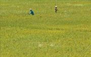 Thứ trưởng Lê Quốc Doanh: Kết nối doanh nghiệp với nông dân để giảm giá thành sản xuất lúa