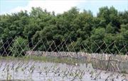 Cần có biện pháp phục hồi hệ sinh thái rừng tự nhiên tại Việt Nam