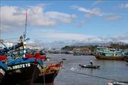 Tăng cường giải pháp cấp bách chống khai thác hải sản bất hợp pháp