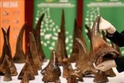 Bàn giao 55 mẫu vật giám định sừng tê giác bị tịch thu tại Sân bay quốc tế Nội Bài