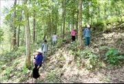 Huyện Than Uyên (Lai Châu) giao rừng đến tận hộ dân để bảo vệ rừng