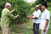 Trồng cây ăn quả trên ruộng bậc thang, cựu Bí thư xã cùng dân thoát nghèo