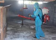 Xuất hiện nhiều ổ dịch cúm gia cầm và lở mồm long móng