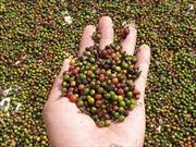 Khuyến cáo doanh nghiệp thận trọng khi xuất khẩu tiêu sang Myanmar