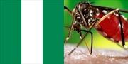 93 người thiệt mạng do dịch sốt xuất huyết bùng phát ở Nigeria