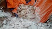 Bắc Ninh khuyến cáo nông dân không nhập đàn lợn mới đến khi hết dịch tả lợn châu Phi