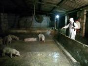 Thịt lợn sạch vẫn tiêu thụ mạnh
