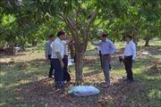 Dân vận khéo giúp người dân Mường La ổn định cuộc sống