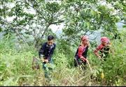 Kiểm tra thực hiện Nghị quyết về công tác dân tộc tại huyện Mường Tè, Lai Châu