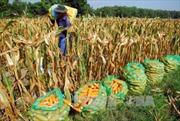 Đẩy mạnh ứng dụng khoa học và công nghệ vào quản lý sản xuất nông nghiệp