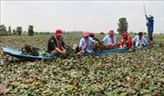 Khai thác du lịch nông nghiệp: Bài 1 - Kinh nghiệm sinh động từ quốc tế