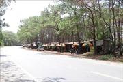 UBND huyện ở Gia Lai cấp giấy chứng nhận quyền sử dụng đất trên đất lâm nghiệp