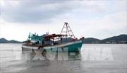 Khắc phục 'thẻ vàng' IUU: Kiên quyết không cho tàu cá chưa đăng kiểm ra khơi