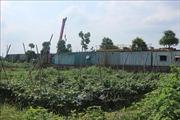 Khắc phục vi phạm trên đất nông nghiệp tại huyện Hoài Đức, Hà Nội