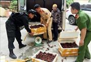 Bắt giữ gần 50 kg tôm hùm đất nhập lậu