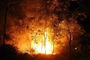 Cháy 5.000m2 rừng trên bán đảo Sơn Trà, 100 người dập lửa trong đêm